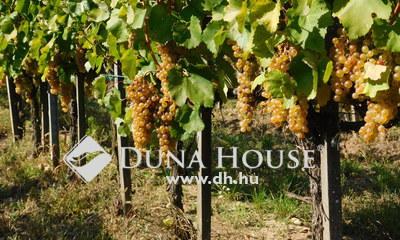 Eladó Telek, Borsod-Abaúj-Zemplén megye, Tarcal, 23 ha szőlőterület+ Pincészet+ Kúria