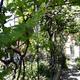 Eladó Lakás, Budapest, 19 kerület, Hofherr Albert utca