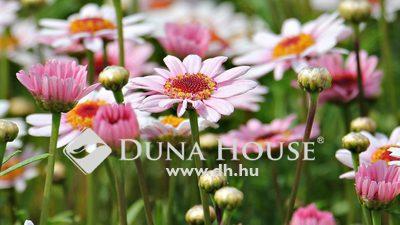 Eladó Ház, Pest megye, Hernád, Nappali+3 hálószobás újépítésű